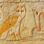 The  egyptian owl symbolizing the letter  'M'