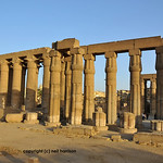Massive open and closed lotus columns at the ancient Luxor Temple in Egypt at sunset;